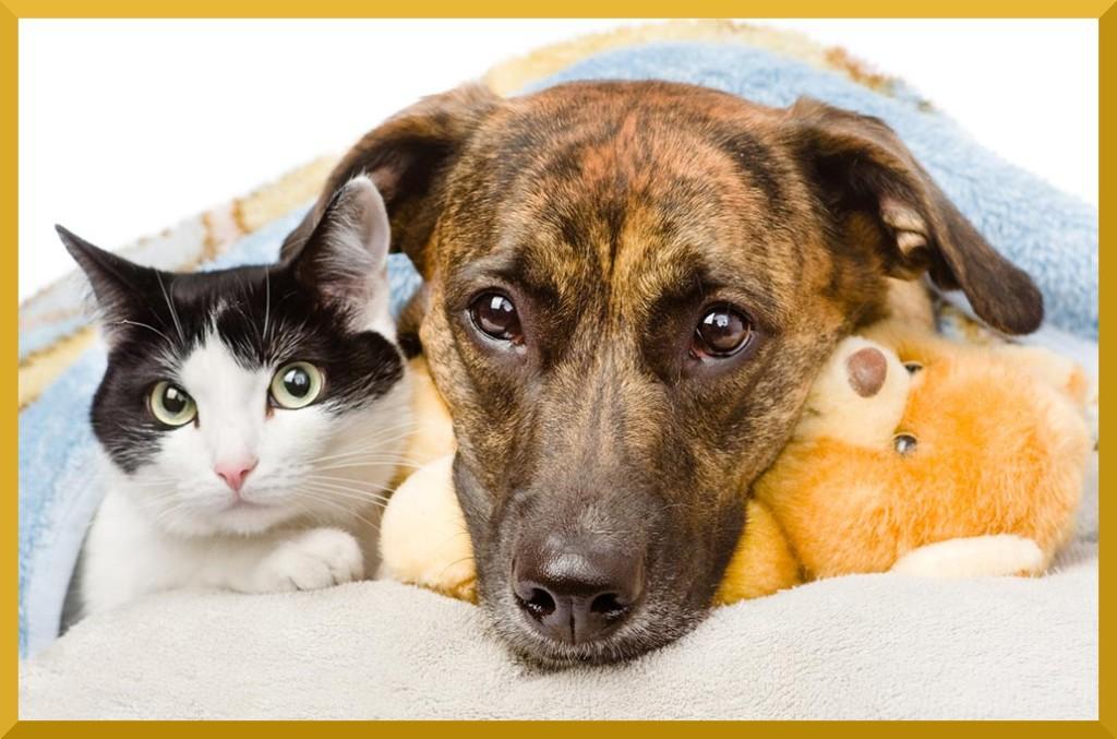 Immagine di un cane e di un gatto che rappresenta un'infezione da Parvovirus e quindi una Parvovirosi