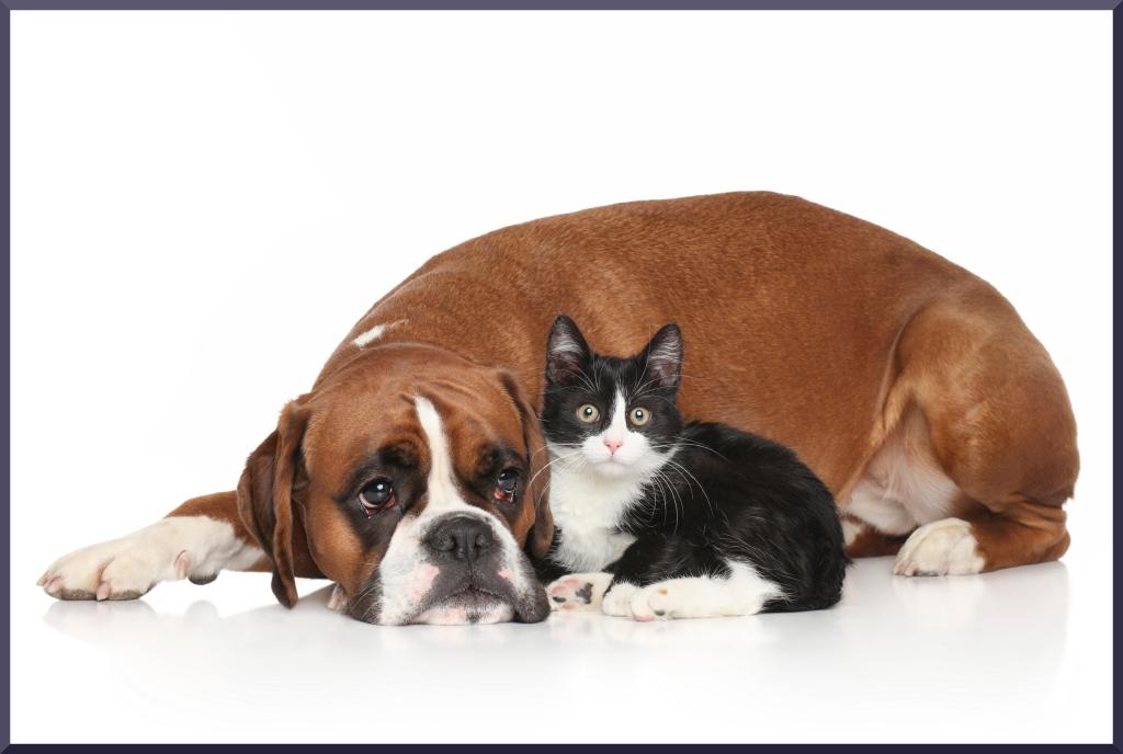 Momento della sterilizzazione e castrazione nel cane e nel gatto