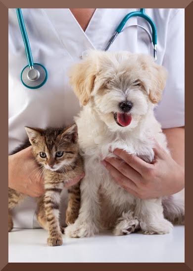 Vaccinazioni obbligatorie per cane e gatto e differenza con i vaccini raccomandati