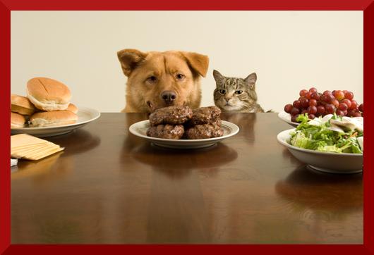 Immagine che rappresenta un cane ed un gatto che cercano di capire quale sia la dieta migliore per loro.